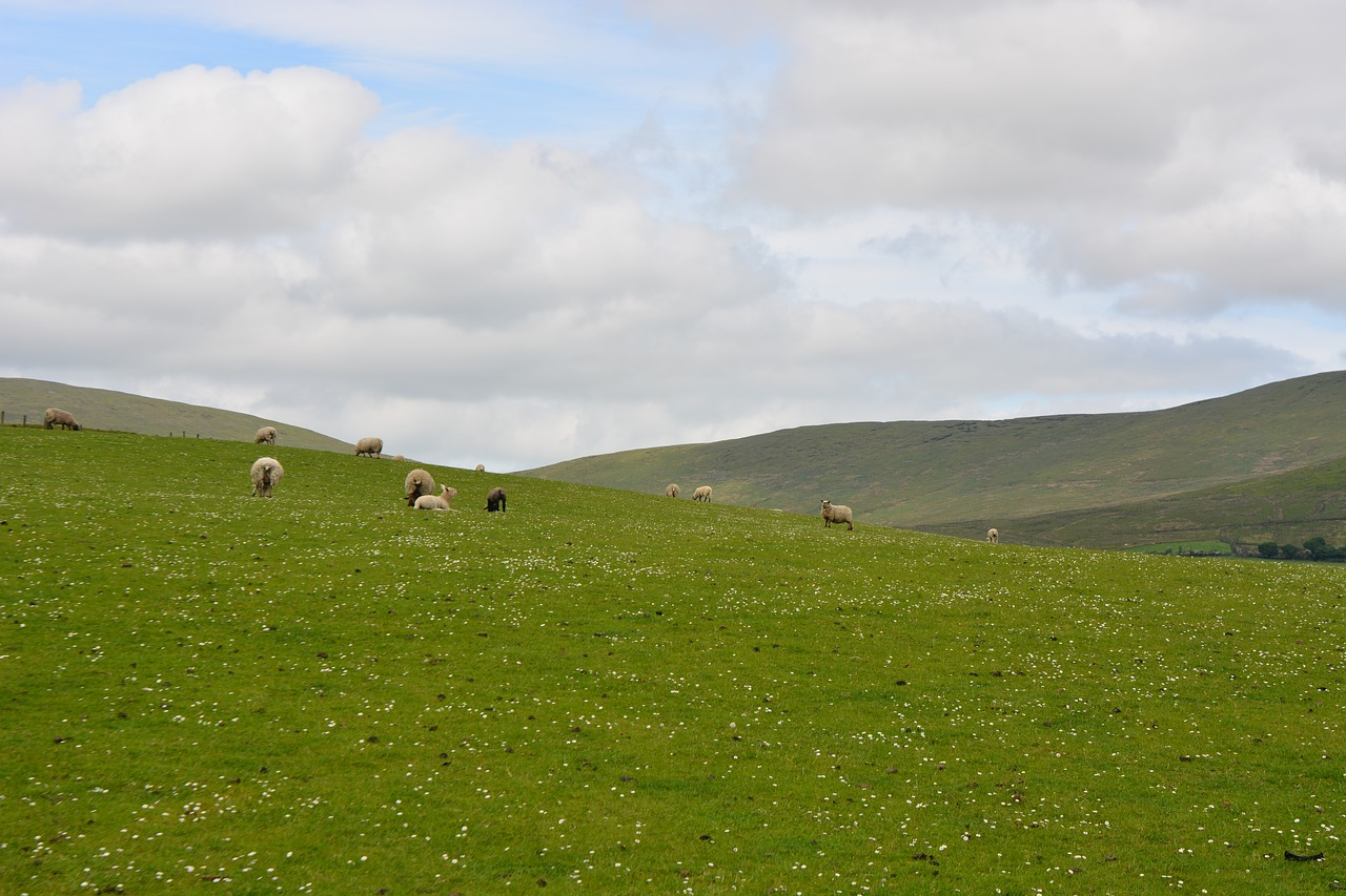 アイルランドの大地